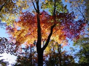 Campground in Autumn