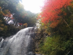 Kityotaki in Autumn