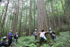 Exploring Otaki's forest